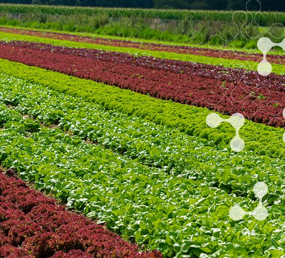 fertilizante-para-plantas