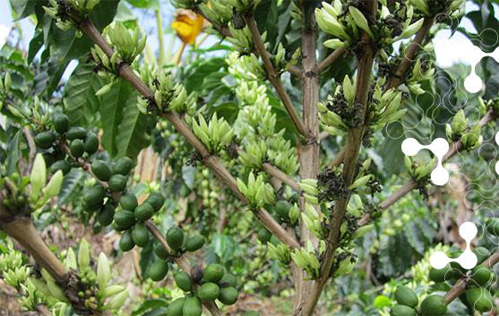 abono-para-cultivos