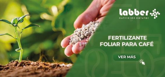 fertilizante-foliar-para-cafe