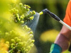 fertilizantes-para-plantas