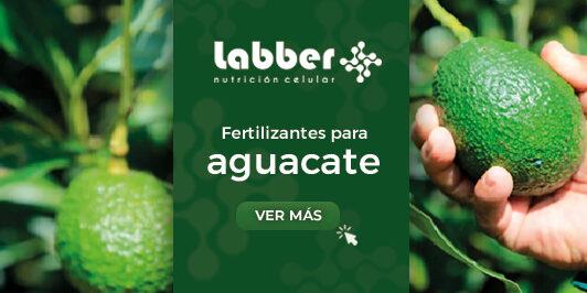 fertilizante-para-aguacate