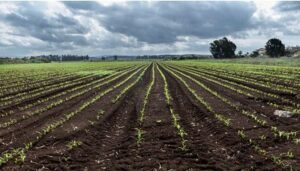 fertilizantes-en-colombia