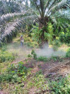fertilizantes-para-aguacate-hass