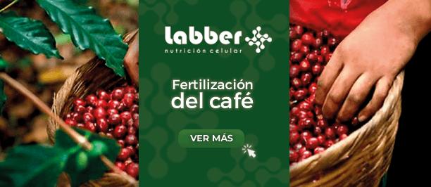 fertilizacion-del-cafe