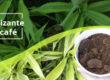 Fertilizante-de-cafe